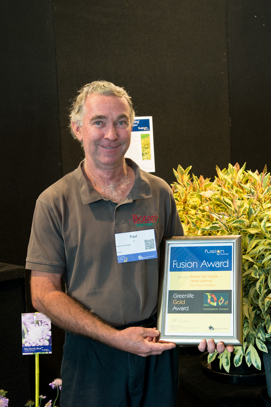 Ficus White Lightning - Fusion Gold Award Greenlife – with Paul Hill, Botanix Plant Supply